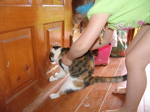 Дверки для кошек в туалет своими руками 14